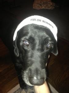 Bailey's ready!