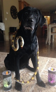 Hey Ben! Come out and look at this! Aunt Jules' doggie, Bailey, is dressed for Halloween! Snakes and puppy dog tails! Get it? HA!