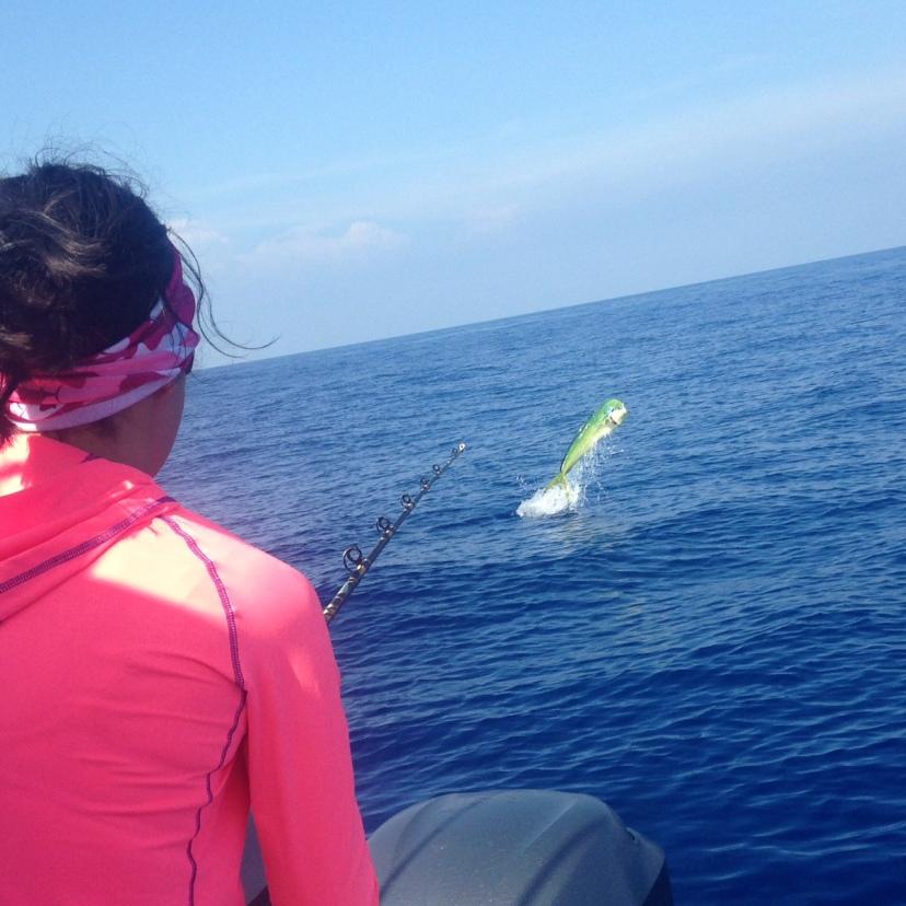 Bull dolphin.